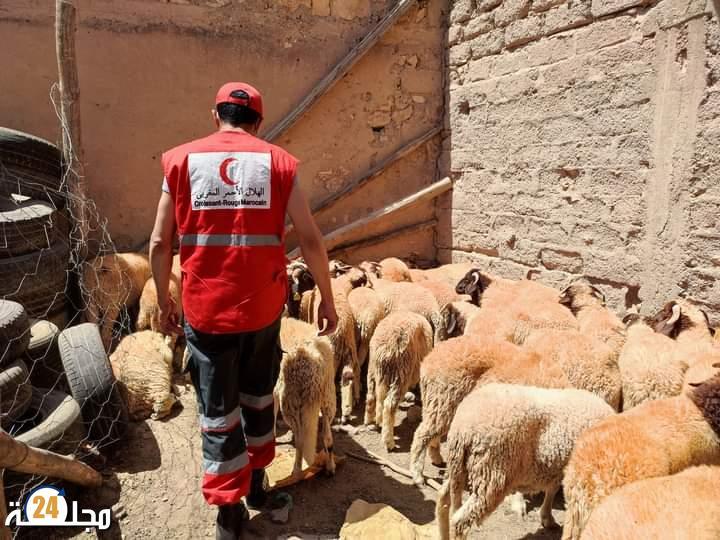 الهلال الأحمر المغربي بالرحامنة يوزع 37 أضحية على الأسر المعوزة بالإقليم