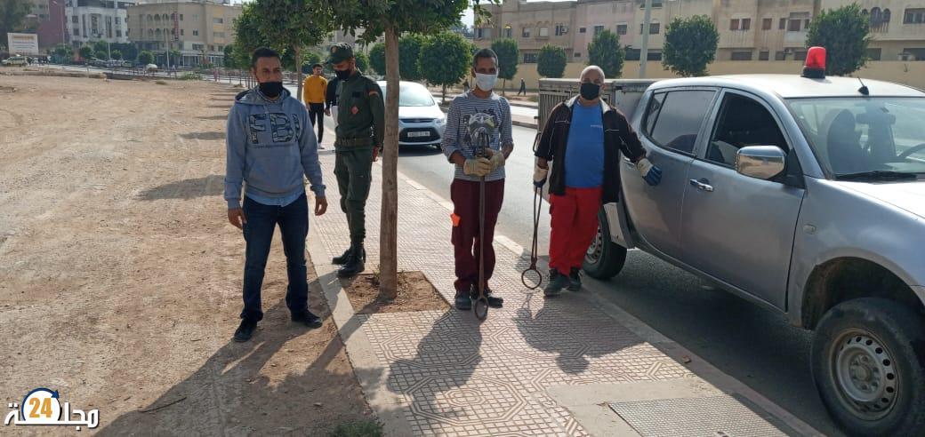 جماعة سطات تشن حملة واسعة ضد الكلاب الضالة (صور)